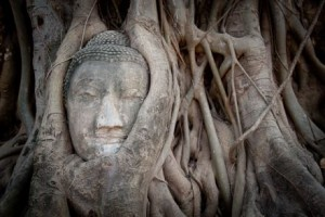 Ayathuya_tree_root_Thailand_photo_tour_joel_collins_440_293_80