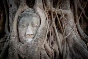 Ayathuya_tree_root_Thailand_photo_tour_joel_collins_440_293_80